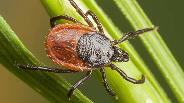 Two New Tick Types Found In Connecticut Spark Concern Over Lyme and Tick-borne Disease for 2020 Season